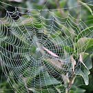 Along Came a Spider.... by MaryLynn