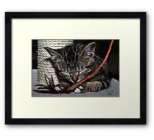""" Santa Bring Kitty Toys "" Framed Print"