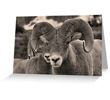 Rams are Close! (BW) Greeting Card