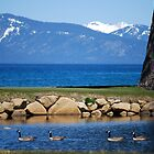 Edgewood Golf Course - Lake Tahoe by MaryLynn