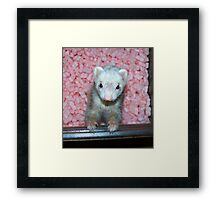 Popcorn in the Pink Framed Print