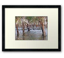 Birdsville Framed Print