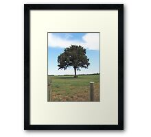 Tree Along Fence Line Framed Print