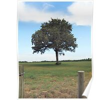 Tree Along Fence Line Poster