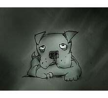 sad pooch Photographic Print