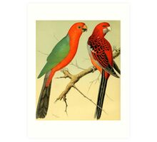 Colorful Birds of the Amazon: 1878 naturalist illustration Art Print