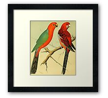 Colorful Birds of the Amazon: 1878 naturalist illustration Framed Print