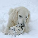 Playing in the snow by Trine
