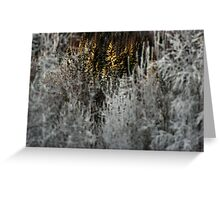 Light up the forest Greeting Card