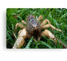 Hi I'm Spike: Burrowing Crayfish (Engaeus hemicirratulus)  Canvas Print
