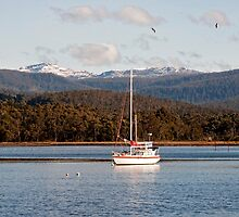 On the Huon with Snow on Hartz Mountains by jayneeldred
