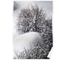 Bushes in Winter Series - 3 Poster
