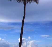 Lonely Palm Tree by Rosie Brown