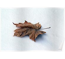 Maple Leaf on Snow Poster