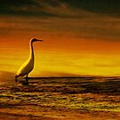 Egret on Chesil Beach, Portland, Dorset, UK by buttonpresser