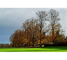 Tree-Lined Avenue Photographic Print