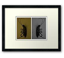 Cockroach..!! Framed Print
