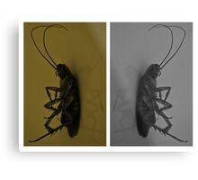 Cockroach..!! Metal Print