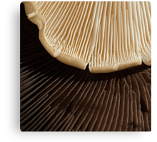Chocolate or Vanilla?  Choose! Canvas Print