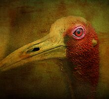 Red Eye - Sarus Crane by Photography by TJ Baccari