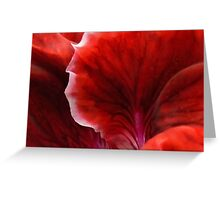 Geranium Red Abstract Greeting Card