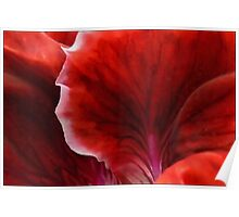 Geranium Red Abstract Poster