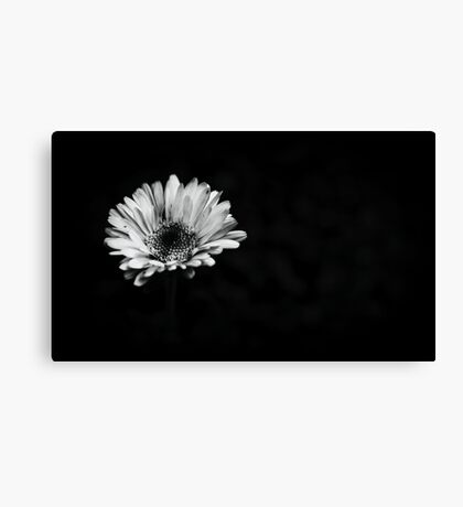 Lonely Flower. Canvas Print
