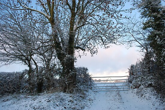 Snowy Gate by Claire Elford