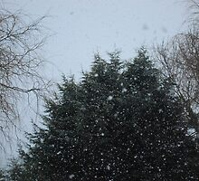 Firs and Snow by Claire Elford