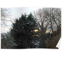 Sun, Snow and Trees Poster