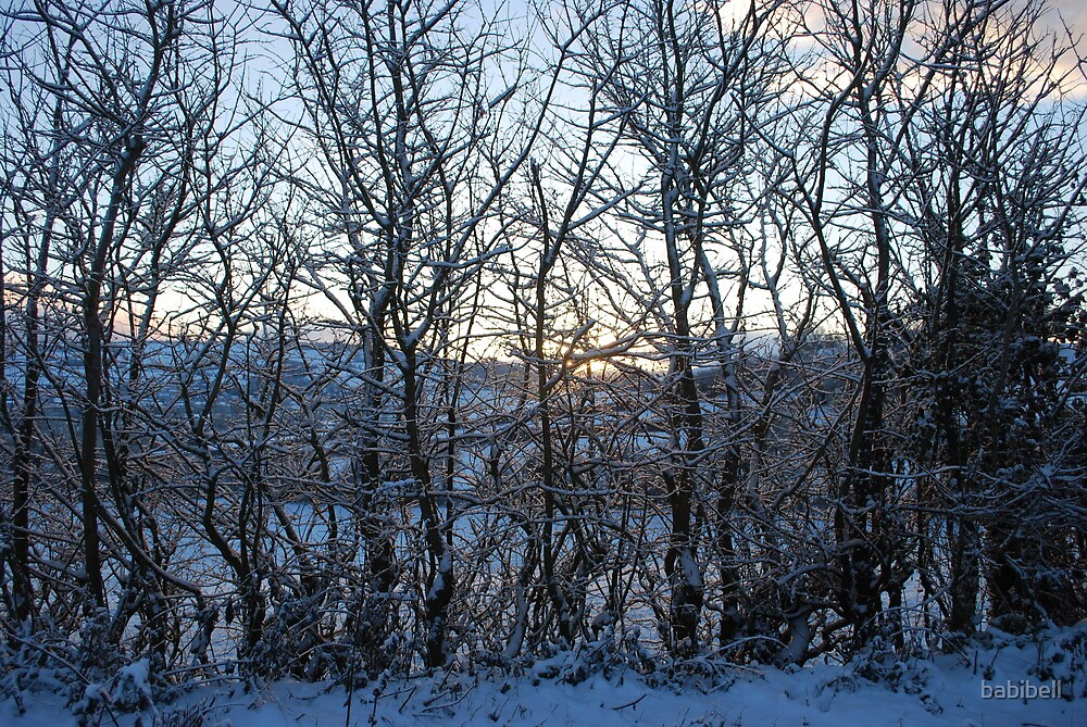 Snowy Trees by Claire Elford
