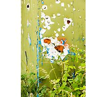 'Em Daisies Shot Up Photographic Print