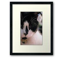 Cat. Framed Print