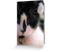 Cat. Greeting Card