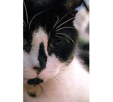 Cat. Photographic Print