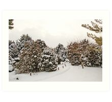 Late Afternoon Canadian Winter Scene Art Print