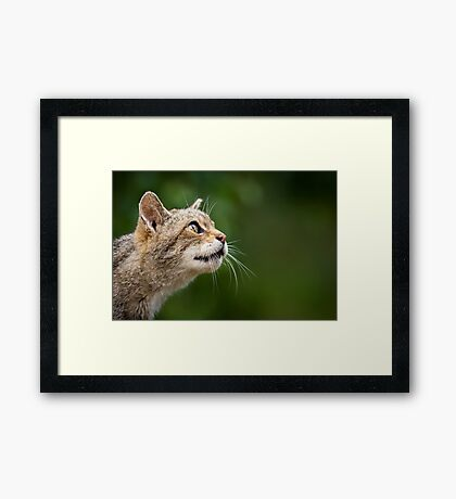 On the Wild Side Framed Print