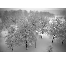 Looking down on snowy trees Photographic Print