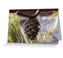 Natures Oraments Greeting Card
