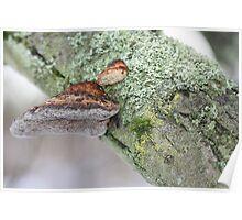 Bracket & Lichens Poster