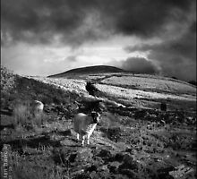 Great Hill - Anglezarke by synergymono