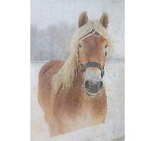 Winter Horse  - JUSTART © Photographic Print