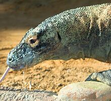 Komodo Dragon at Lowry Park Zoo by Sheryl Unwin