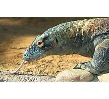 Komodo Dragon at Lowry Park Zoo Photographic Print