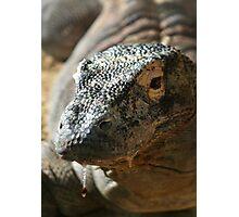 Komodo Dragon II at Lowry Park Zoo Photographic Print
