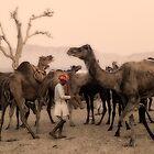 India: A day in the life of the Pushkar Camel Fair by Neville Bulsara