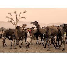 India: A day in the life of the Pushkar Camel Fair Photographic Print