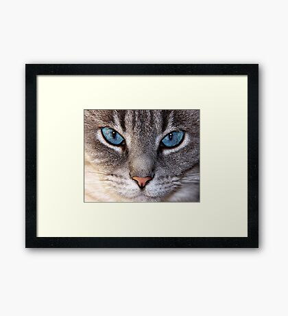 closeup of cat Framed Print