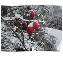 Red Icey Berries with Snowflakes Poster