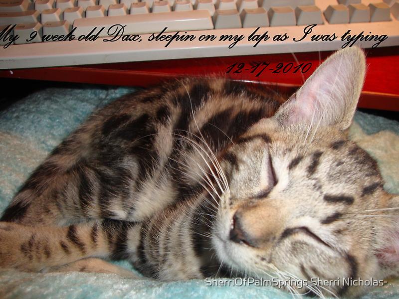MY KITTY DAX, WAS SLEEPING ON MY LAP WHEN I WAS TYPING by Sherri     Nicholas
